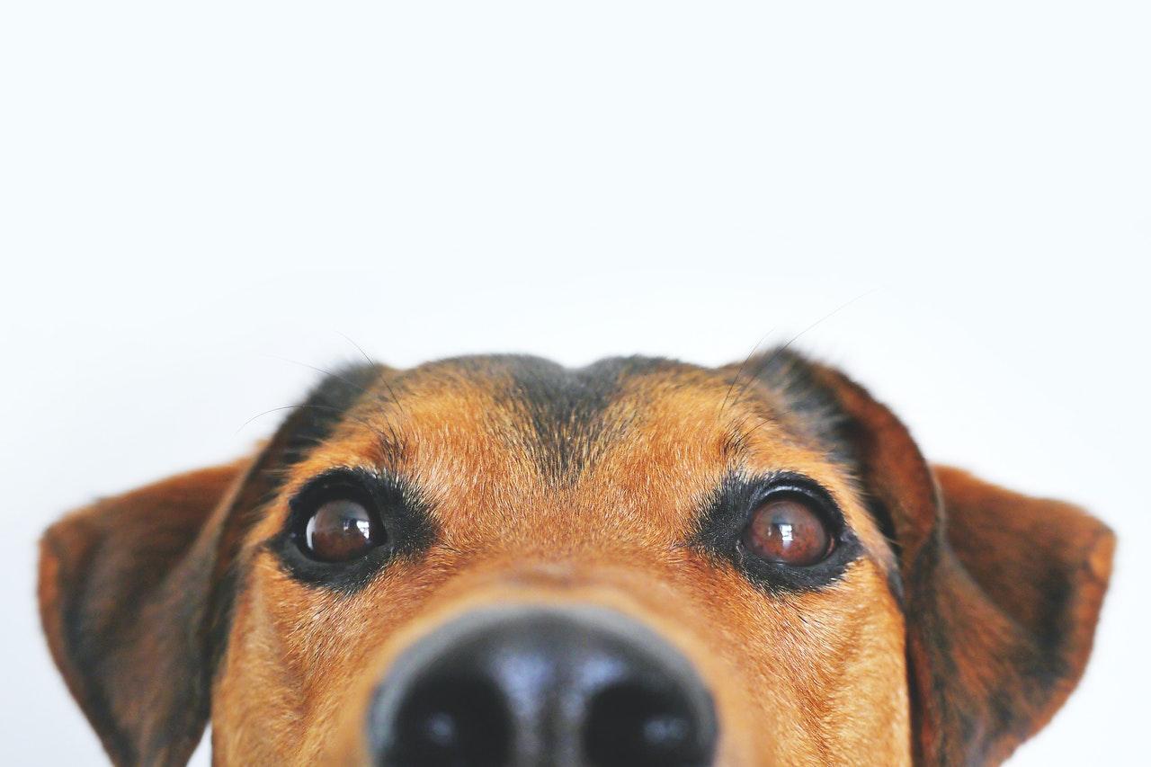 El mantrailing refuerza el vínculo entre el perro y su guía humano